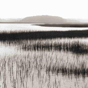 Nut Island, Salt Marsh